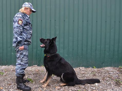 ВУссурийске полицейская собачка покличке Опал помогла раскрыть грабеж