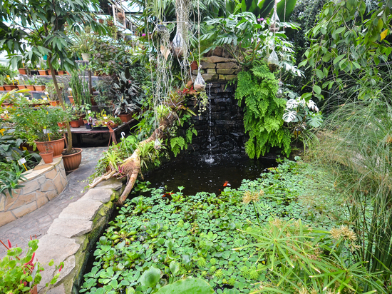Кого из представителей флоры можно «приручить» у себя на даче в Приморье