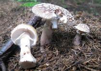 Сбор грибов в Подмосковье взяли под контроль: создана специальная карта