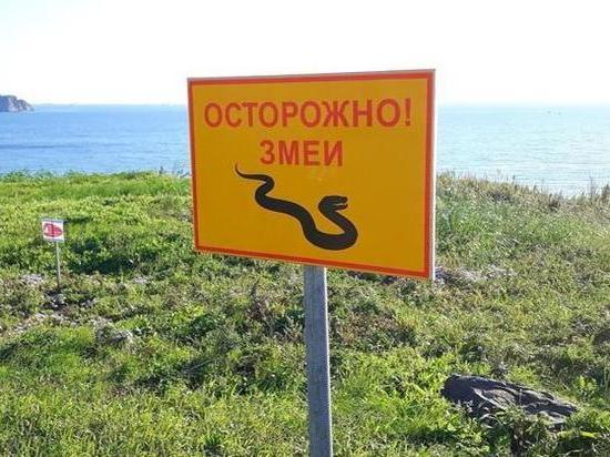 В океанариуме на Русском завелись ползучие гости